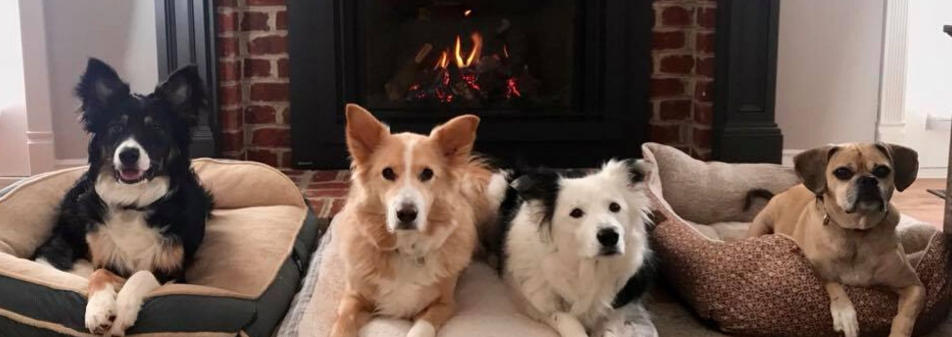 12 Pictures Proving Pets Love Fireplaces